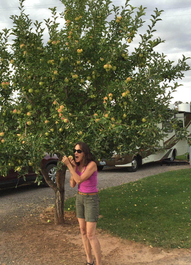 We camped at an RV park near Capitol Reef, an oasis in the desert known for apple orchards. Fortunately, the owner was unaware that no apple is safe when Mary is nearby!