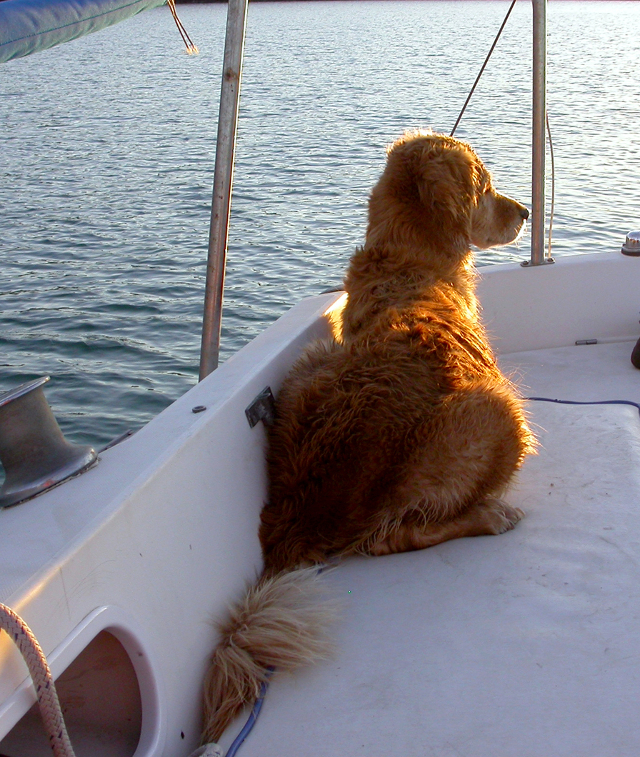 Venus enjoyed our Catalina 27 when it was docked but frightened easily and hated tacking and heeling.